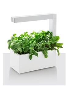 Ogród domowy Herbie jest energooszczędnym urządzeniem do uprawy roślin. Dzięki wydajnemu oświetleniu LED rośliny rosną nawet trzy razy szybciej niż w...