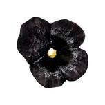 Gałka Z kolekcji Flower - motyw granatowy bratek. Wykonana z tworzywa sztucznego.  Wyjątkowa gałka z kolekcji Flower w kształcie granatowego bratka...