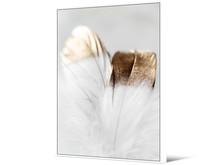 Obraz piórka TOIF22691 - biało-złoty